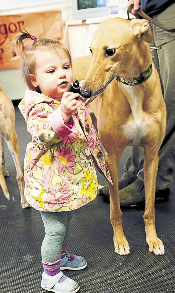 A young girl interacts with Scout, a retired racing greyhound from Lamoine on Sat., April 20's meet and greet demo at For Dogs Boutique in Holden. Over the course of three hours, more than 15 greyhounds interacted with the Bangor Roller Derby girls and the public during the outreach event.