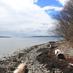 Sears Island decision a missed opportunity for Maine