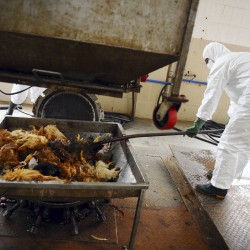 Evidence of human transmission of new bird flu raises worries