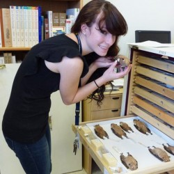 Marissa Altmann examines bat skins at the Smithsonian Museum.