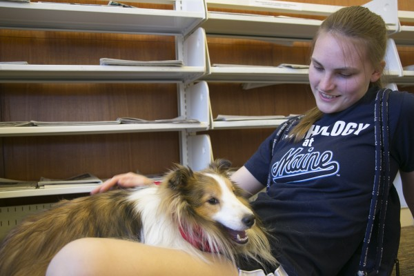 University of Maine junior Krista Nelson pets Joey, a therapy dog from Renaissance dogs, in Fogler Library on UMaine's campus on Wednesday. Therapy dogs were available to students who needed a break and stress relief ahead of final exams.