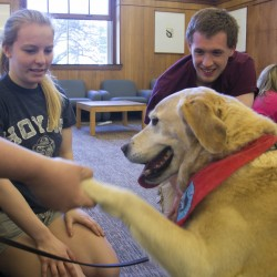 "University of Maine freshmen Shelby Rider (left) and Justin Kemp (right) watch therapy dog Atticus show off his one-and-only trick, the handshake, in Fogler Library on UMaine's campus on Wednesday. Therapy dogs were available to students who needed a stress relief from final exams. ""During finals time we're all stressed — and having pets around, they just make everything happy,"" said Rider. ""They should do it during every finals week."""