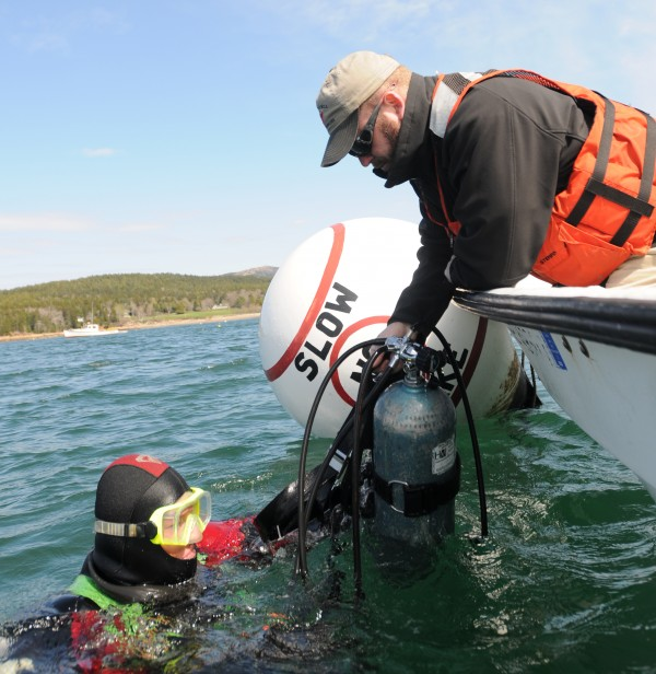 Harbor Master Shawn Murphy gets help from UMaine graduate student Chris Roy after diving on a concrete mooring known as a Habitat Mooring System in Seal Harbor designed to encourage sea life to flourish in and on it.