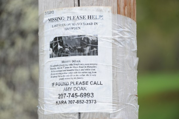 A lost dog poster is taped to a power pole near 50 Mayo Road in Hampden on Sunday. Kara Sickles who lives at 50 Mayo Road, was summoned on and assault charge after she allegedly shot  the owners of the dog, her former housemates, with a pellet gun when they came to her house, threw rocks at her windows and refused to leave without the lost dog. Aaric Rowe, who lives with Sickles, says the dog has not been seen since it disappeared in March.