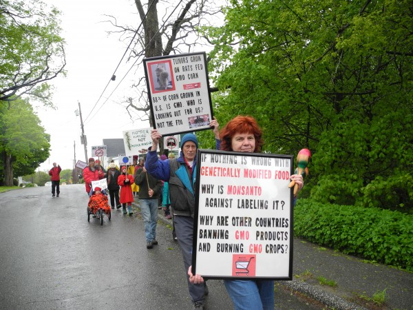 People take to the streets of Rockland on Saturday afternoon in a March Against Monsanto, an event that was held in other locations around the country and internationally.