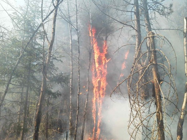 Forest rangers and firefighters are battling a large brush fire in Washington County.