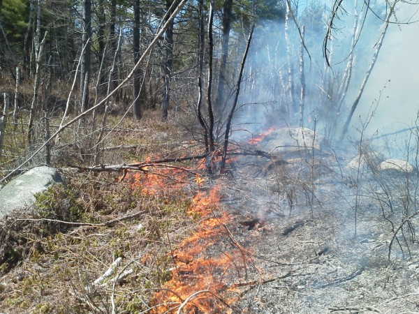 A large brush fire in Washington County had forest rangers and firefighters battling the blaze.