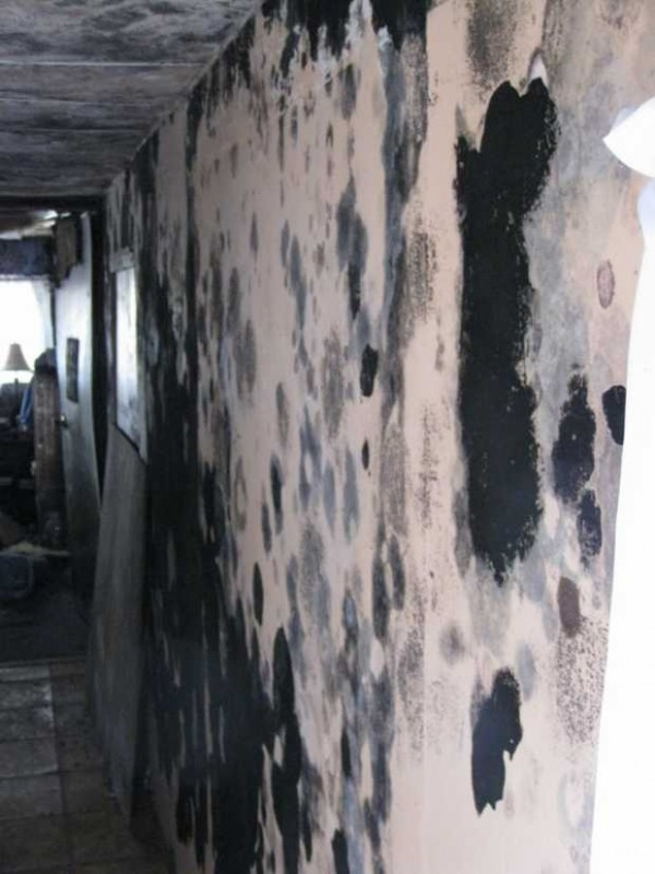 Black mold covers the walls of this 199 Red Schoolhouse Road home in Farmington.