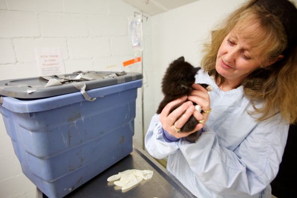 Lisa Smith of the Coastal Humane Society in Brunswick holds a kitten Friday found with nine other kittens and three cats, duct taped in a plastic tote, in Freeport late Wednesday.