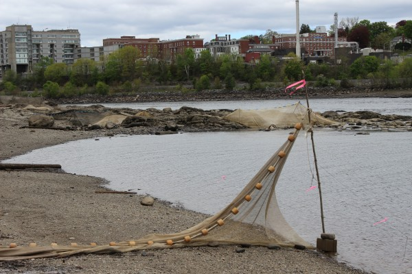 A fyke net sits high and dry on the Brewer shore of the Penobscot River with Eastern Maine Medical Center in the background on May 17, 2013.