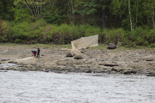 Elver fishermen set their fyke net near the Penobscot Salmon Club in Brewer on Friday.