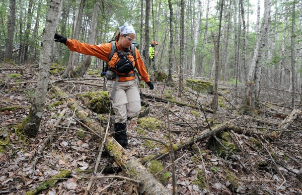 Jen Sinsabaugh of Naples, a member of Wilderness Rescue Team, goes through an area of woods off Hudson Road on Friday with about 25 other searchers.