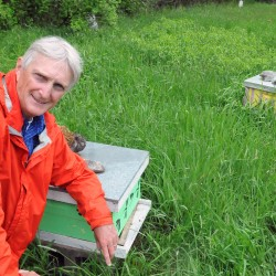 University of Maine professor of insect ecology Frank Drummond says the Colony Collapse Disorder is still affecting a very large number of bees in Maine. Thousands of hives are trucked to the state each year since 2006 to help the proper pollination of fruit crop in Maine.
