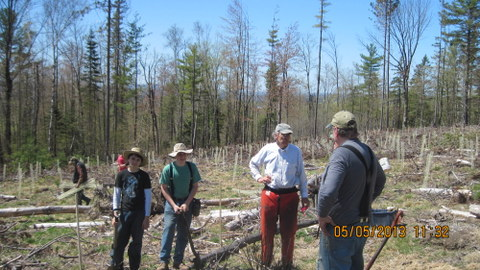 Sangerville Community Forest Committee Photo