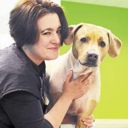 Pets, pet-lovers receive a warm welcome at Winter Harbor Inn