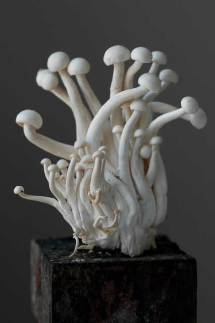 Lynn Karlin: Untitled, archival pigment print (mushrooms)