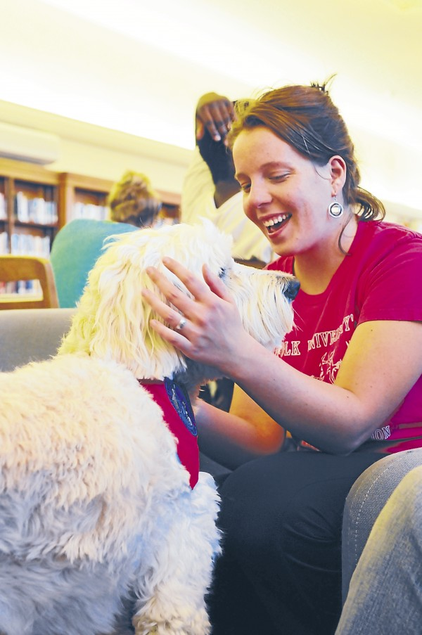 Senior wildlife ecology major Olivia Reed of Warren greets Ginger, a 4-year-old goldendoodle at the University of Maine's Fogler Library. Reed, a dog owner, said the presence of therapy dogs on campus during finals week was the kind of stressbuster she needed.
