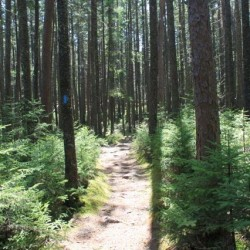 Acadia Friends to celebrate National Trails Day June 4