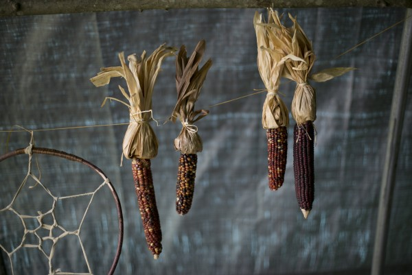 Dried corn hangs in a display booth of native American foods at the METIS pow-wow, Saturday, June 8, 2013, in Dayton, Maine. Corn, which was one of the Indians main foods, was often dried to use later.