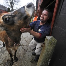 More than 100 Maine farms open their doors to public