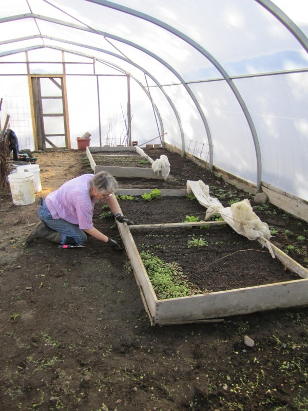 Jessie King works in the greenhouse at the Kitchen Garden Restaurant in Steuben.