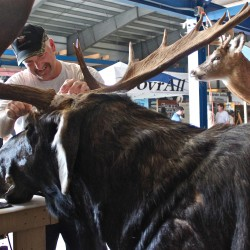 Rangeley to be 2012 site of Maine moose lottery