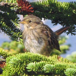 Bangor City Forest an ideal birding destination