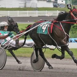 Man named harness racing's 'rising star'