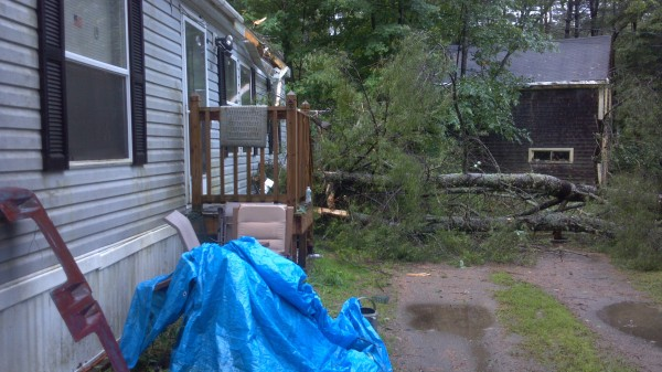 A pine tree sits in the yard of a Hudson woman after it collapsed onto her mobile home during Tuesday's severe storms.