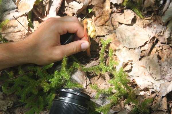 Dakota Smith, a volunteer in the Plants of Baxter State Park Project, photographs Monotropa hypopitys, commonly known as pinesap, on June 20, 2013, near the Abol Stream Trail in Baxter State Park.