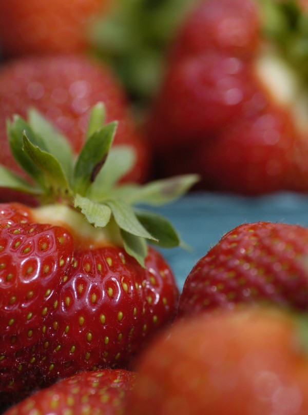 Freshly picked strawberries sit in their quart containers at Tate's Strawberry Farm in East Corinth. Strawberries are considered an effective disease management and health-promoting dietary regimen.