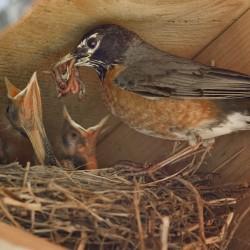 Freeport backyard a bird watcher's paradise