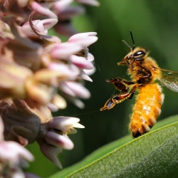 U.S. pesticide makers seek answers as bee losses sting agriculture