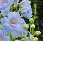 9 Beautifal Corinth-area Flower Gardens