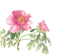 Botanical artist, Linda Heppes Funk, to teach a 3-day class in botanical illustration at Woodlawn in July