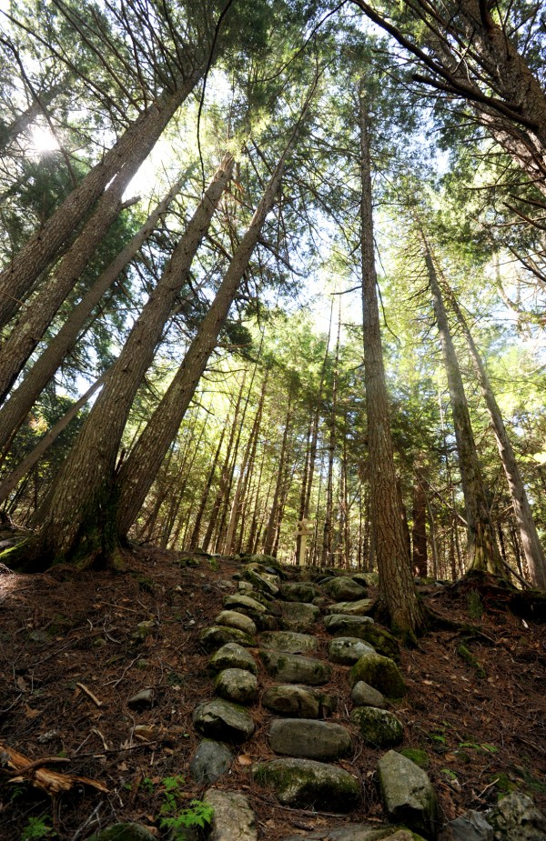 Along the Ravine Trail, stone stairs climb a hill in the forest at Fields Pond Audubon Center.