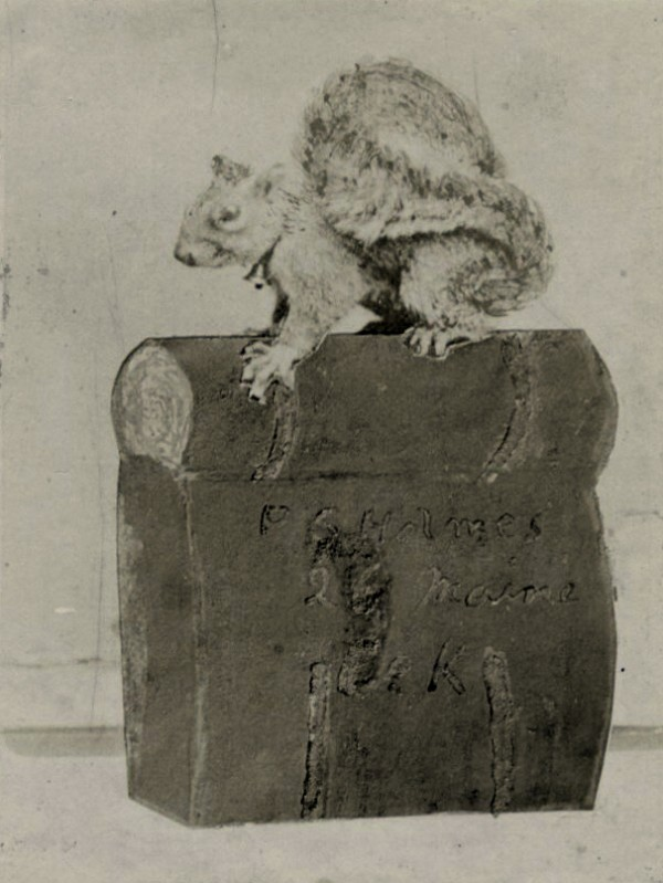 With a bell tied around its neck, the eastern fox squirrel that Philip Souder Holmes of Stockton Springs &quotcaptured&quot in Louisiana in mid-April 1863 perches atop Holmes's knapsack. The squirrel made its home in the knapsack, which is engraved with Holmes's name and Co. K, 26th Maine. This photo was published in the history of the 26th Maine Infantry Regiment.