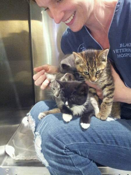 Blake Veterinary Hospital has two mother cats and eight kittens found last week that are ready for new homes.
