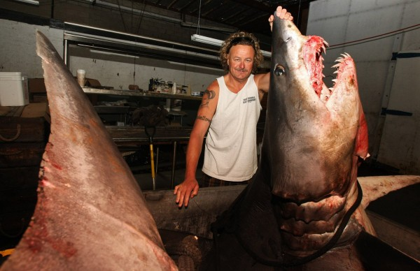 Kent Williams, owner of New Fishall Bait Company, stands next to a 1,323.5 pound mako shark at the company's headquarters in Gardena, California on Tuesday, June 4, 2013. On Monday, a conservation group will ask the federal government to expand the protections under the Endangered Species Act to include marine species, including sharks.