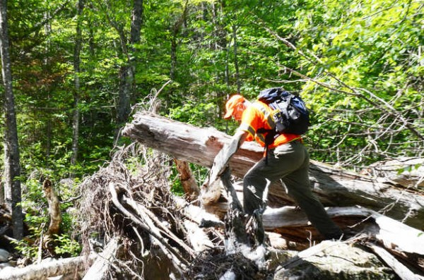 Marc Keller, a volunteer with Franklin Search and Rescue, scrambles over the stump of a blown-down tree in a portion of the Rapid Stream in Mount Abram Township during the search for missing Appalachian Trail hiker Geraldine Largay on Tuesday.