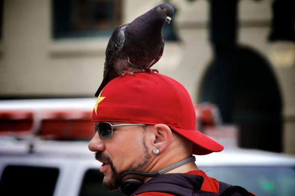 Calling himself the &quotBird Man of Portland, Maine,&quot Starr Sarabia is a familiar sight in Congress Square where he can often be seen with pigeons perched on his head, shoulders and arms.