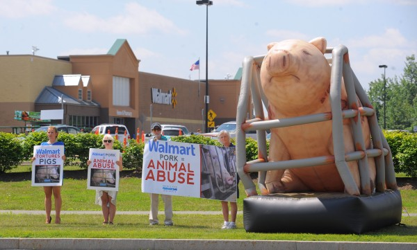 Animal rights activists demonstrate near the Walmart store in Brewer Friday, July 5 to bring attention to the treatment of pigs at Walmart pork suppliers.  They said that they don't want people to stop eating pork, just to know that the animals are treated terribly by suppliers. &quotThey are kept in such small cages that they can't turn around,&quot said Jeni Haines, national campaign coordinator for Mercy for Animals.