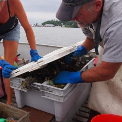 NC firm encourages Maine fishermen to sell invasive green crabs to be processed into cat food
