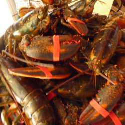 When it comes to the lobster market, supply is the limit
