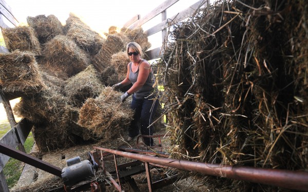 Heather Patten loads bales onto a conveyor while putting hay in a barn at Patten Farm in Hermon Tuesday. Some crops have been negatively affected by the recent heat, but it seems to have helped the hay this year.