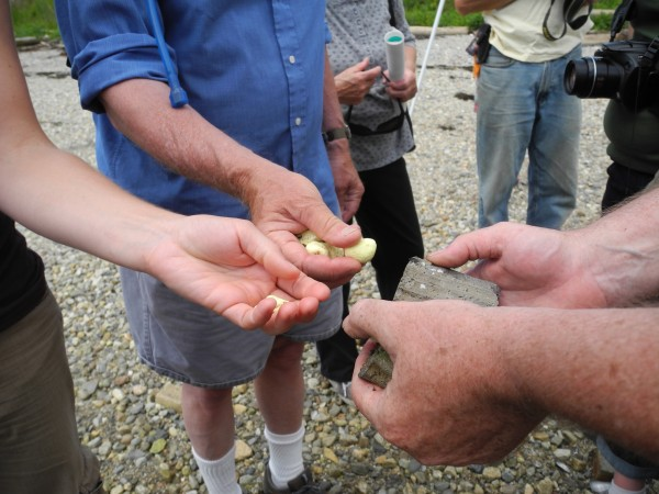 Members of environmental group Friends of Penobscot Bay held yellow chunks of sulfur in their hands Tuesday during a &quotwaterfront waste dump tour&quot and press conference held on the shore near the GAC Chemical Corp. on Kidder Point.