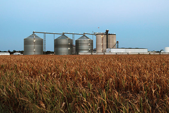 A field of dead corn sits next to the Lincolnland Agri-Energy ethanol plant July 25, 2012 in Palestine, Illinois.