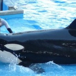 SeaWorld to expand killer whale habitat at its parks