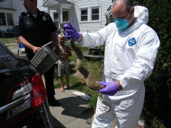 Old Town officials remove a snake from a home on High Street in Old Town.