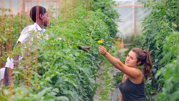 Hanne Tierney's son Sam Tierney (left), 10, hands a flower to Caitlin Curcuruto while she was pruning tomato plants in one of the greenhouses at Fail Better Farm in Etna.  Sam found the flower while playing outside and brought it in the greenhouse to show it to everyone.
